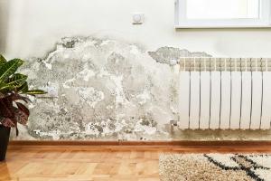 Umidità muri Parma